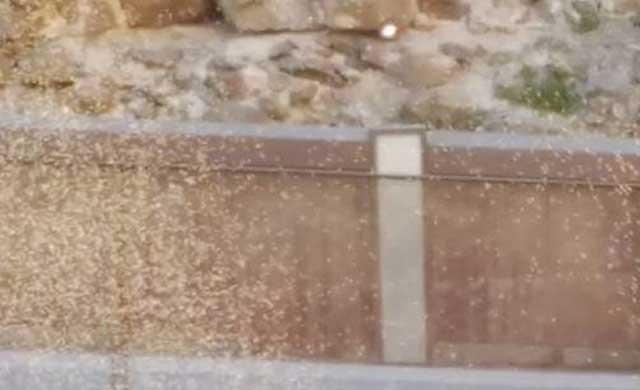 Los mosquitos vuelven a causar problemas a hosteleros y vecinos