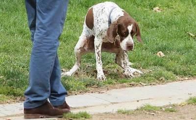 Quejas vecinales por los excrementos de perros en la vía pública