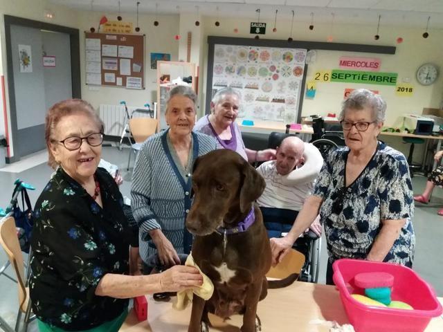Cerca de 250 personas mayores han participado en el programa de Terapia Asistida con Perros