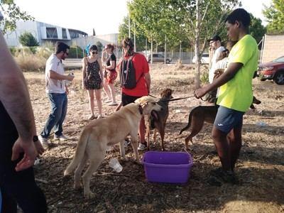El incendio de Toledo obliga a realojar a medio centenar de perros del centro de acogida San Bernardo