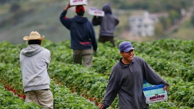CCOO, contra la explotación laboral extrema en el campo
