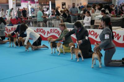 La Exposición Canina sitúa a Talavera en el centro de la atención nacional e internacional