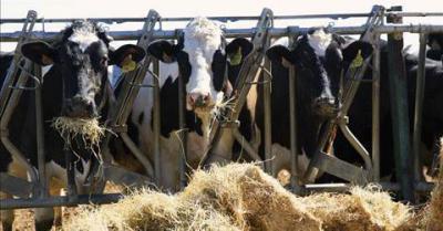 De la tierra a la mesa suben los precios pero no llegan a agricultores y ganaderos