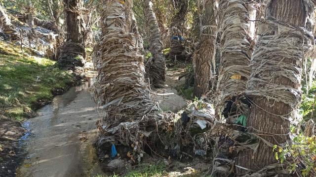 VÍDEO | El río Jarama, que desemboca en el Tajo, lleno de vertidos de aguas fecales y residuos sólidos